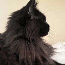 Livy - 3 ans - 7kg