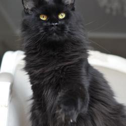 Livy - 3 ans et demi - 7kg300