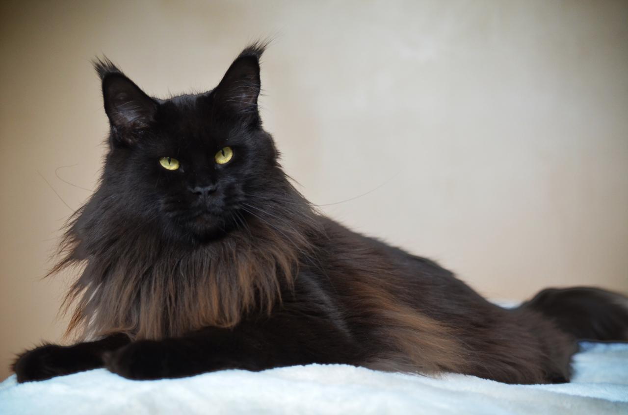 Livydésia - 2 ans - 6kg800