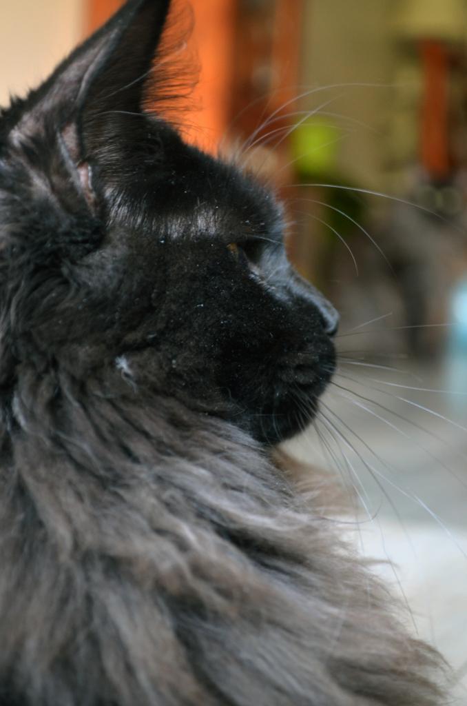 Livydésia - 6 mois - profil