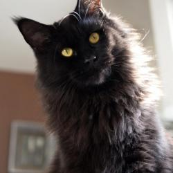 Livydésia - 2 ans et demi - 7kg